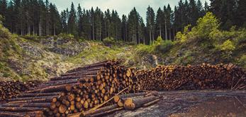 Environmental Policy Puidukoda